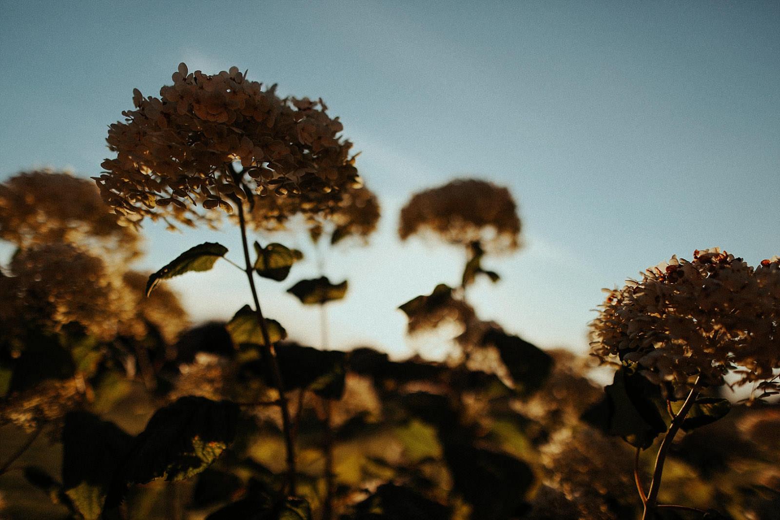 plants a sunset