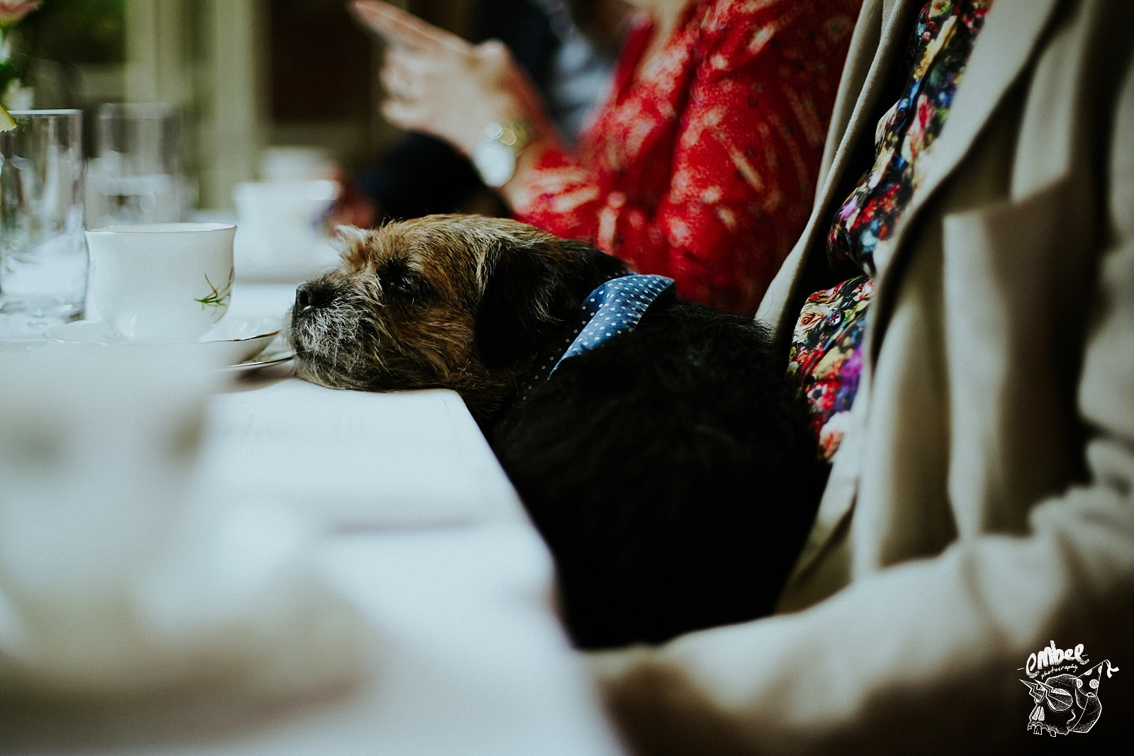 wedding dog with his head on the table