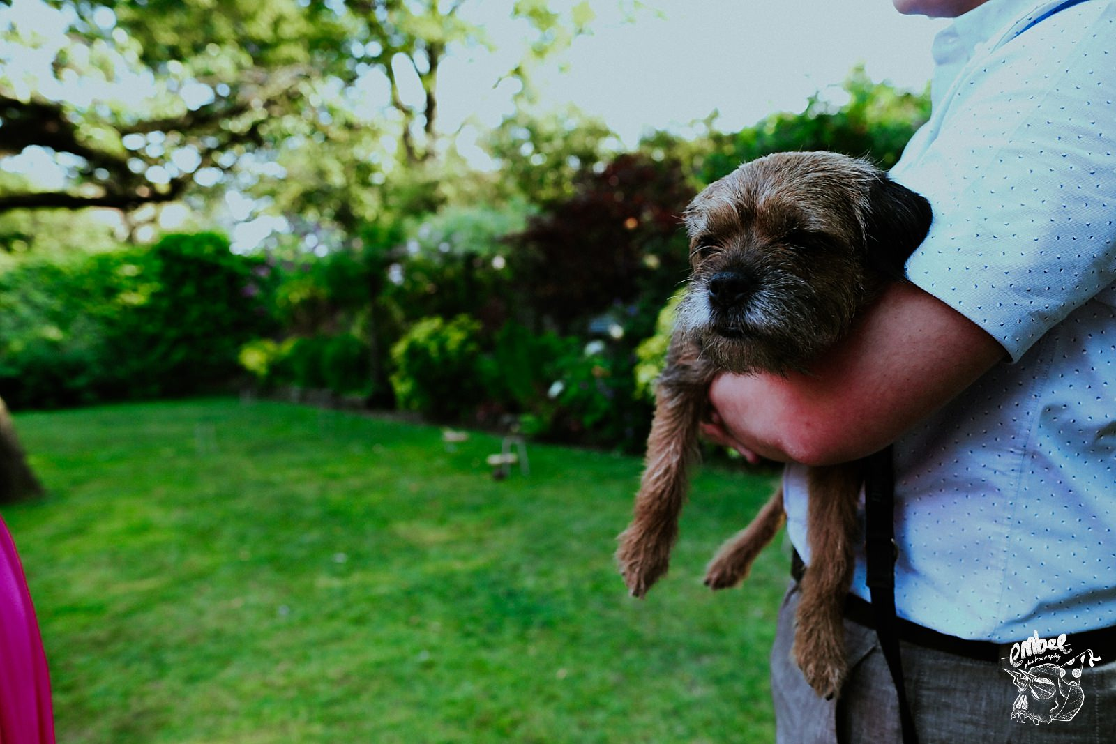 little dog being held in the garden